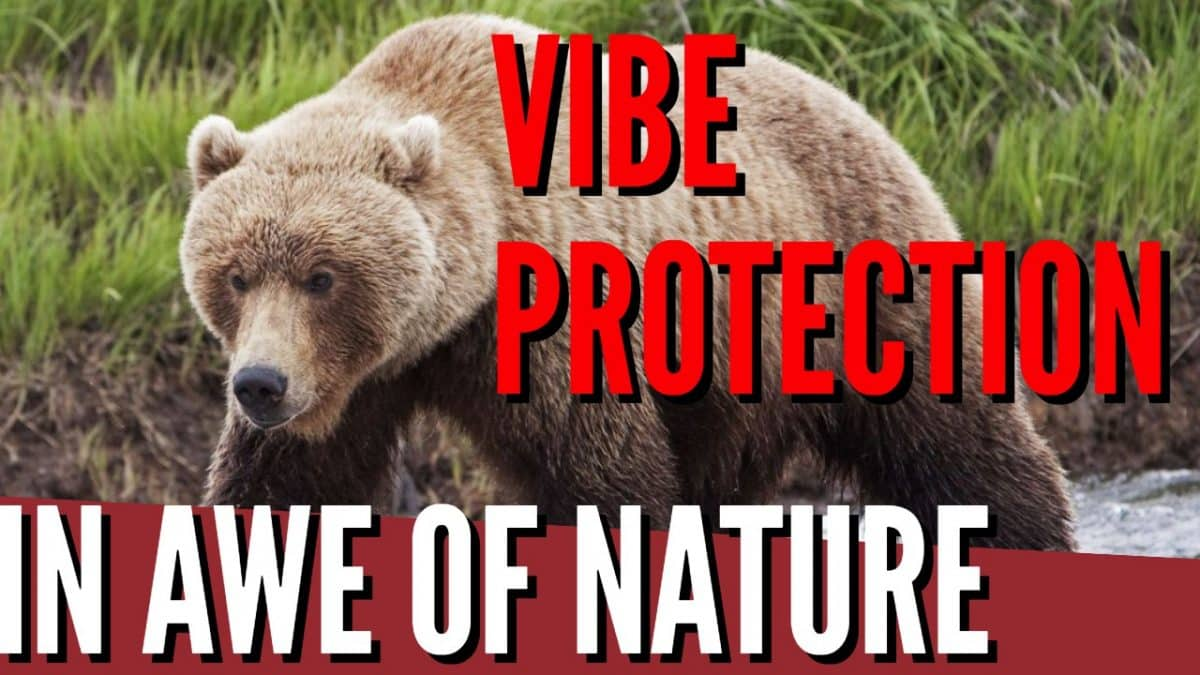 Vibe Protection 101 : In Awe Of Nature